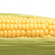 Corn — Stock Photo #27717233