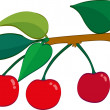 Cherries — Stock Vector #32708509