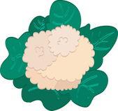 Cauliflower — Stock Vector