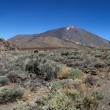 Teide National Park in Tenerife, Spain — Zdjęcie stockowe