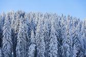 Mountain at winter — Stock Photo