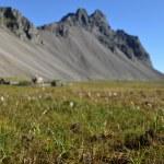 冰岛 — 图库照片 #39474307