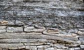 Tronco de árvore velha — Foto Stock