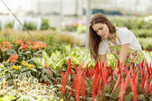 Young woman in the flower garden — Stock Photo
