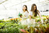 Young women in flower garden — Stock Photo