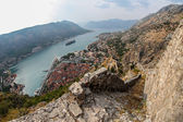Johanniter-festung in kotor, montenegro — Stockfoto