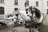 Horse chariots in front of Hofburg palace in Vienna — Stock Photo