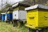 Beehives — Stok fotoğraf