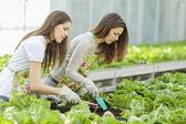 Jonge vrouwen in de tuin — Stockfoto