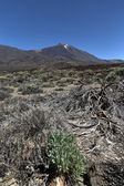 Scenery in Teide National Park in Tenerife, Spain — Stock Photo