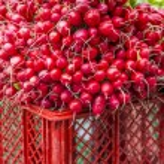 Fresh vegetables on the market — Stock Photo #49853991