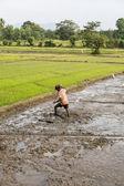 Rice field — Stock Photo