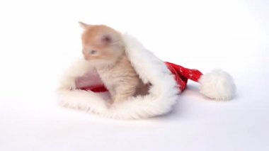 Little red kitten in a Christmas hat — Stock Video