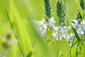 Spring or summer abstract nature background — Stock Photo