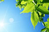 Sole e foglie verdi — Foto Stock