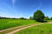 Country road in green field and trees — ストック写真