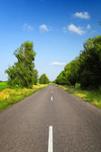 Long asphalt road with green trees — Stock Photo