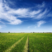 Summer field with tracks of car on grass — Stock fotografie