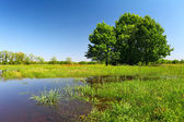 Flood on meadow with trees and grass — Stock Photo