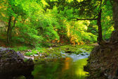 Green forest and water stream with mossy stones — Foto Stock