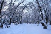 Paesaggio invernale con alberi e neve — Foto Stock