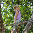Stock Photo: Little girl climbed into tree