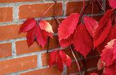 红色的叶子和红砖 — 图库照片