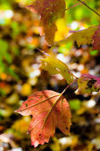 Colorful autumn leaf — Stock Photo