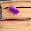 Bookmark flower — Stock Photo