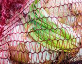 Red plastic mesh with onions — Zdjęcie stockowe