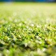 Foto Stock: Synthetic grass