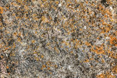 Texture of granite stone — Stock Photo