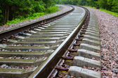 Railway track in a green forest — Stock Photo