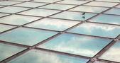 Sparrow on a glass roof — Stock Photo
