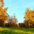 Stock Photo: Autumn trees in park