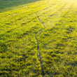 Stock Photo: Lawn in sunshine