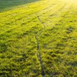 Lawn in the sunshine — Stockfoto