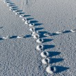Stock Photo: Footprints in snow