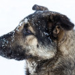 Stock Photo: Stray dog in winter