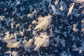 Large crystals of snow — Foto Stock