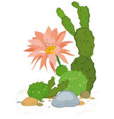 Hand drawn cactus blooms — Stock Vector