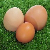 Eggs on the grass — ストック写真