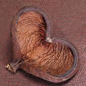 ハート形のシェル — ストック写真