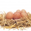 Brown eggs in a nest — Stock Photo #13793641