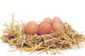 Brązowe jaja w gnieździe — Zdjęcie stockowe