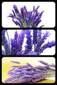 Lavender collage — Stock Photo