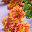 Orange gerbera daisies - Stock Photo