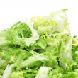 Escarole endive — Stock Photo #15796213