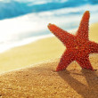 Seastar on the sand of a beach - Stock Photo
