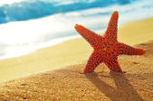 Seastar on the sand of a beach — Stock Photo